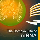Complex-Life-of-RNA