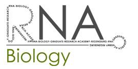 RIGel CBB RNA Biology Logo